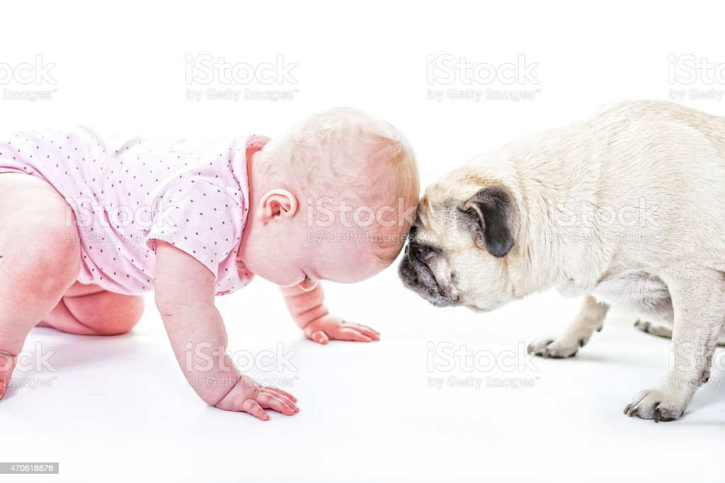 Baby and Pug Butt Heads stock photo