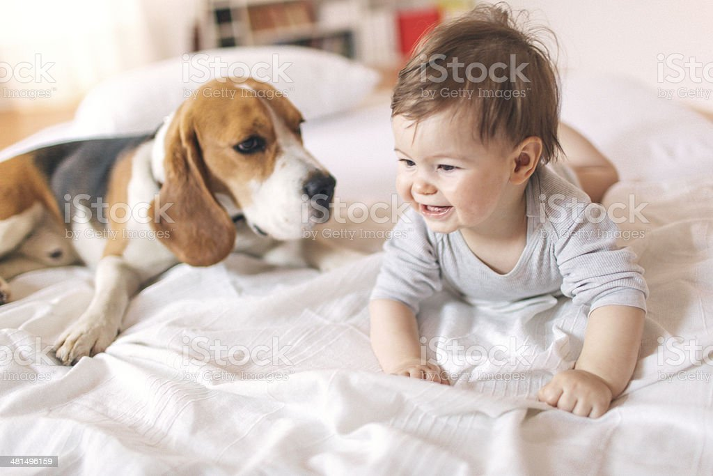 Baby and the dog stock photo
