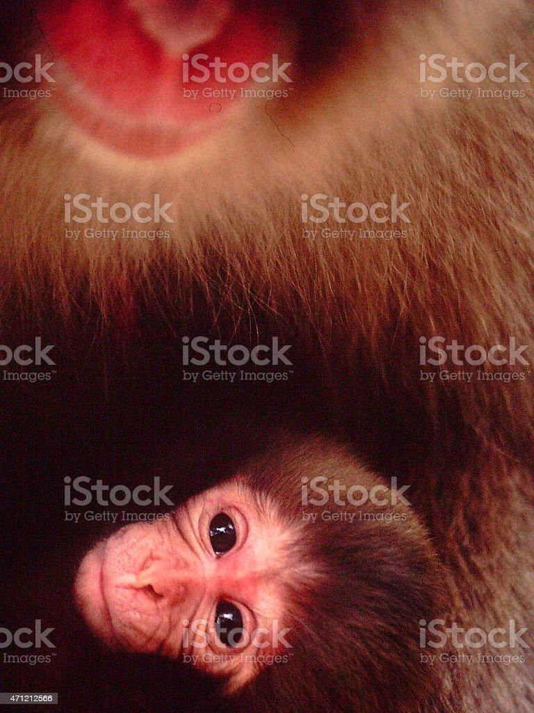 baby animals stock photo