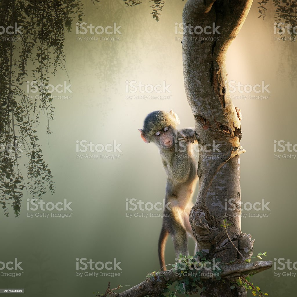 Baby Baboon in tree stock photo