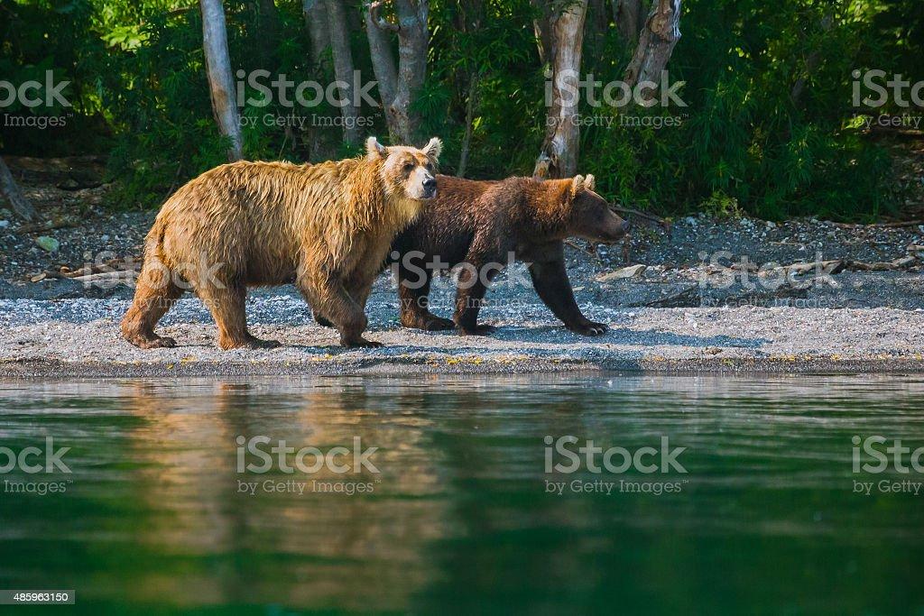 Baby bear with his mama stock photo