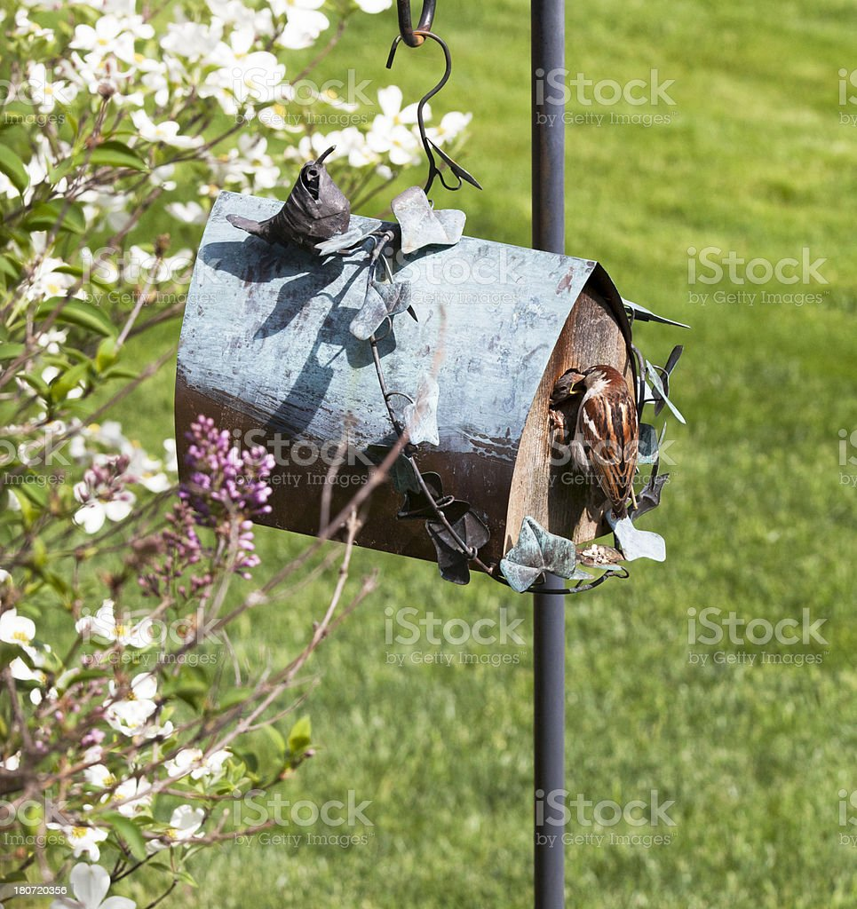 Baby Bird Being Fed from a Birdhouse royalty-free stock photo
