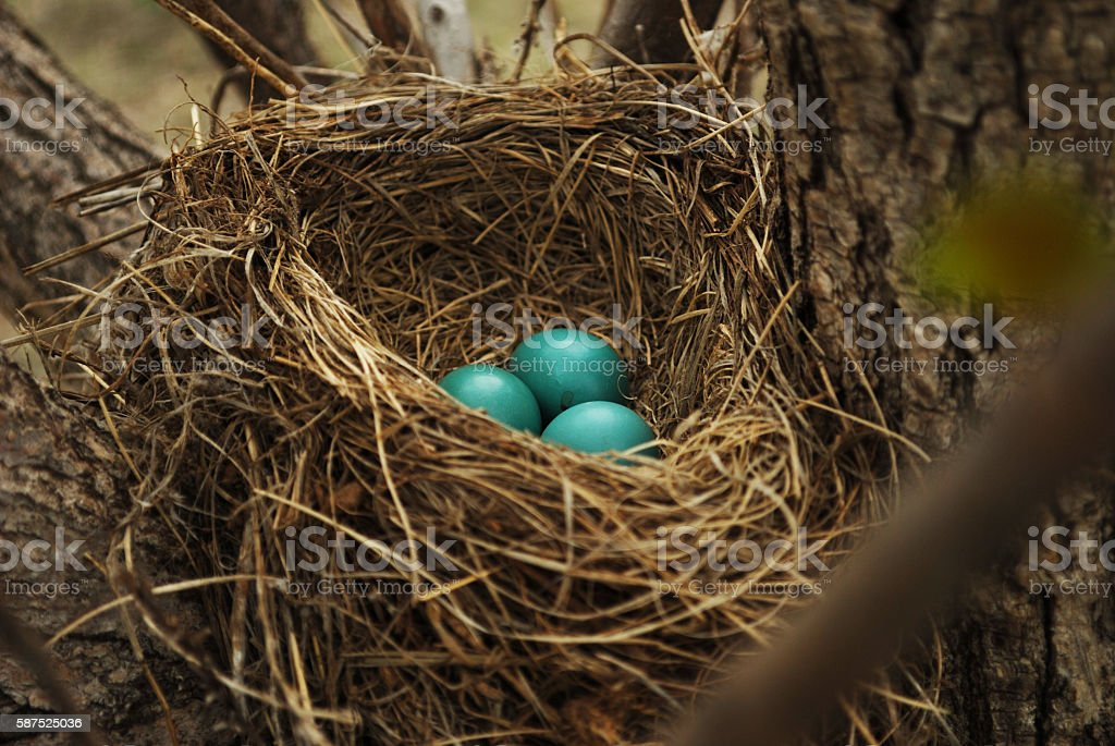 Baby Bird Eggs stock photo