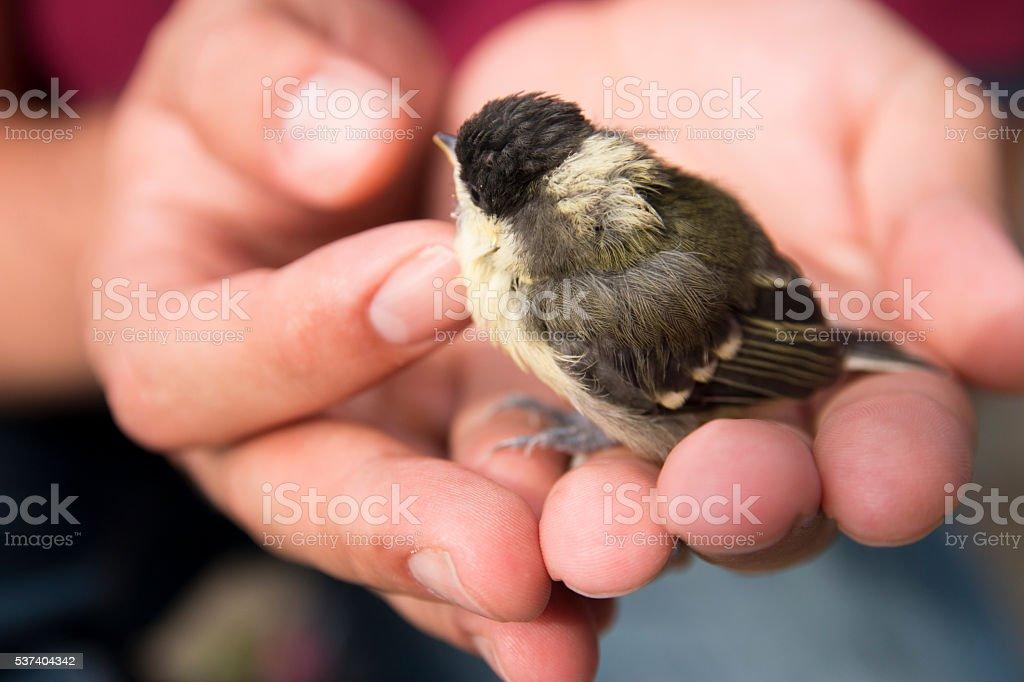 baby bird on hand stock photo