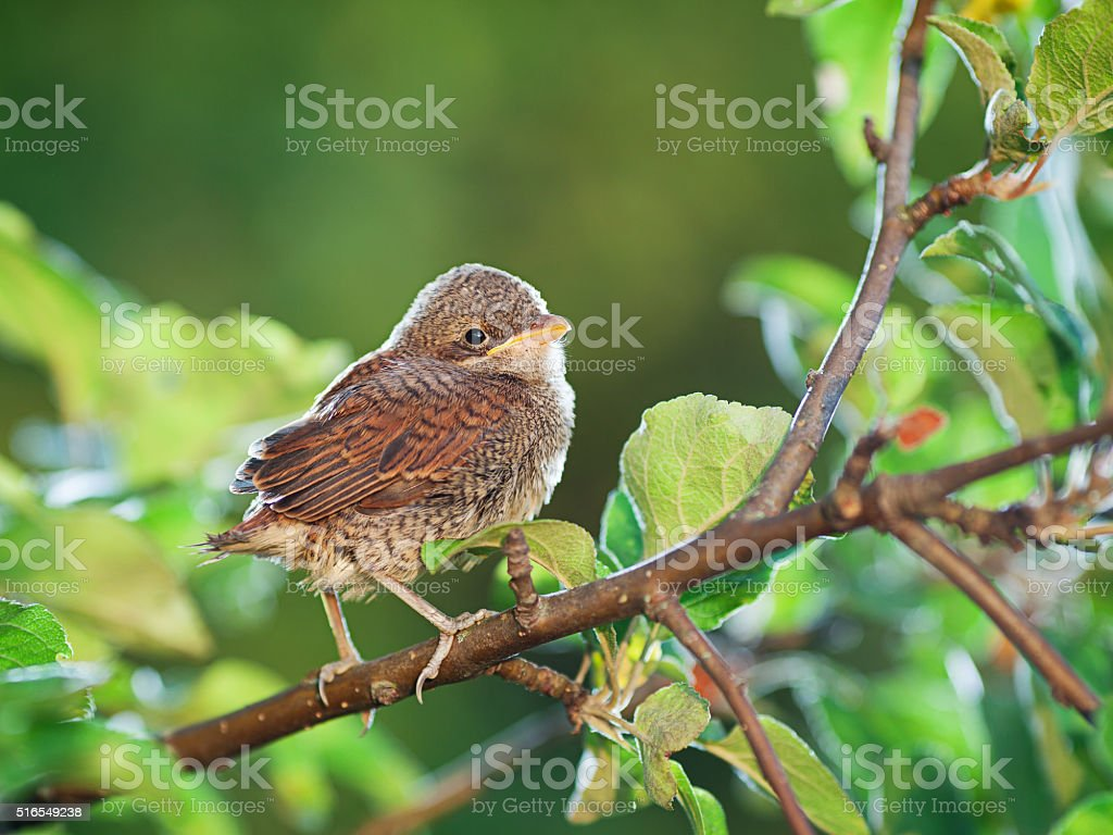 Baby bird on the branch stock photo