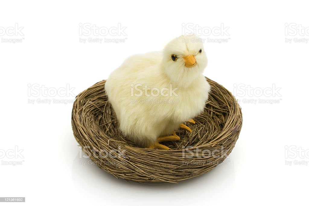 Baby Bird royalty-free stock photo