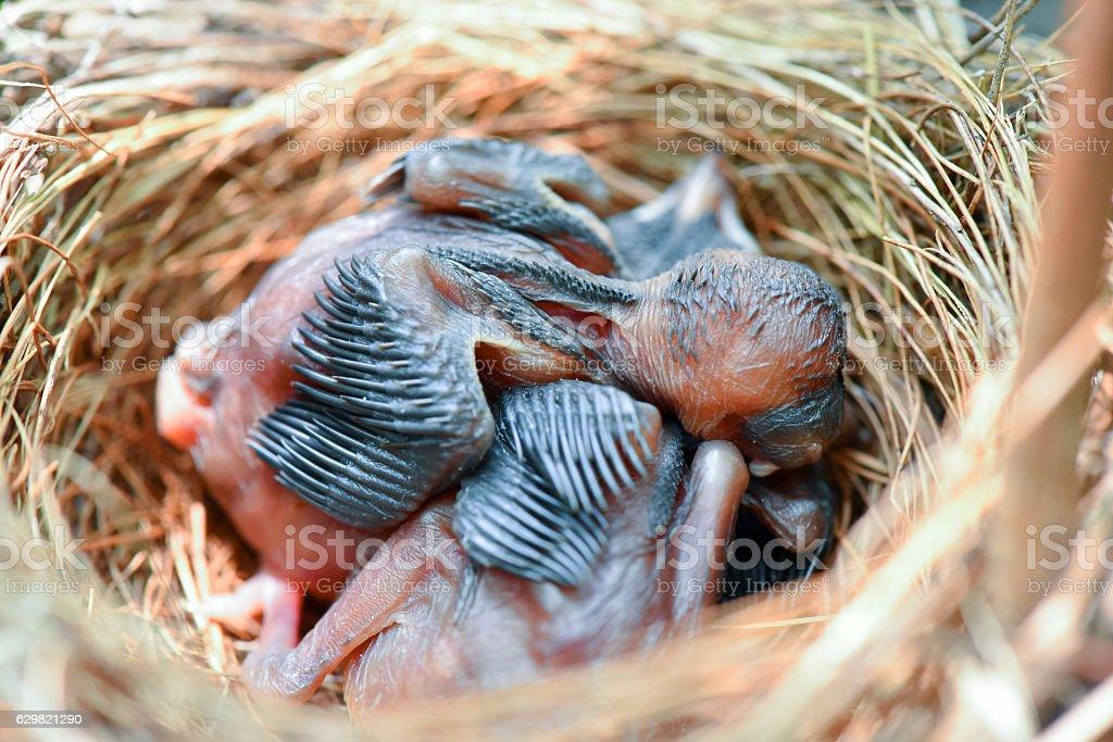 Baby bird stock photo