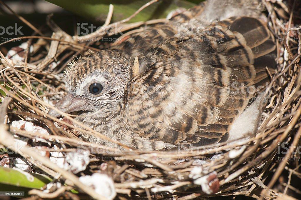 Baby birds in the nest stock photo