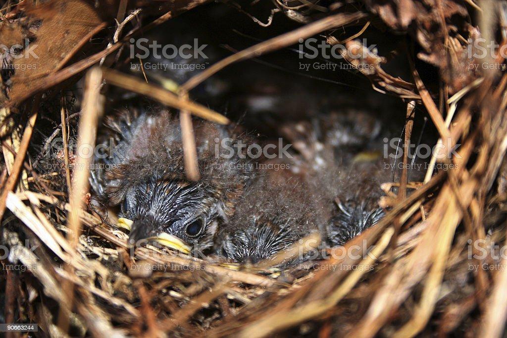 Baby Birds2 stock photo
