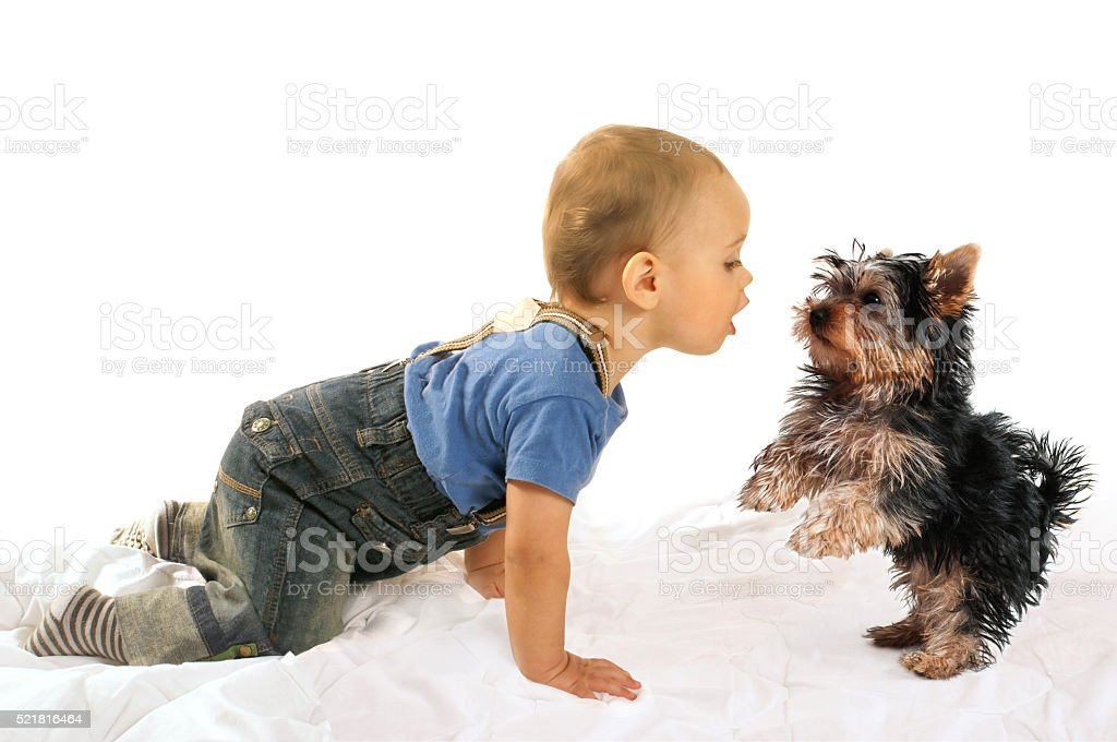 Baby boy and dog puppy playing stock photo