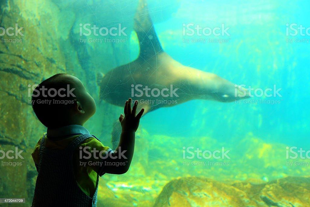 Baby Boy: at Aquarium stock photo