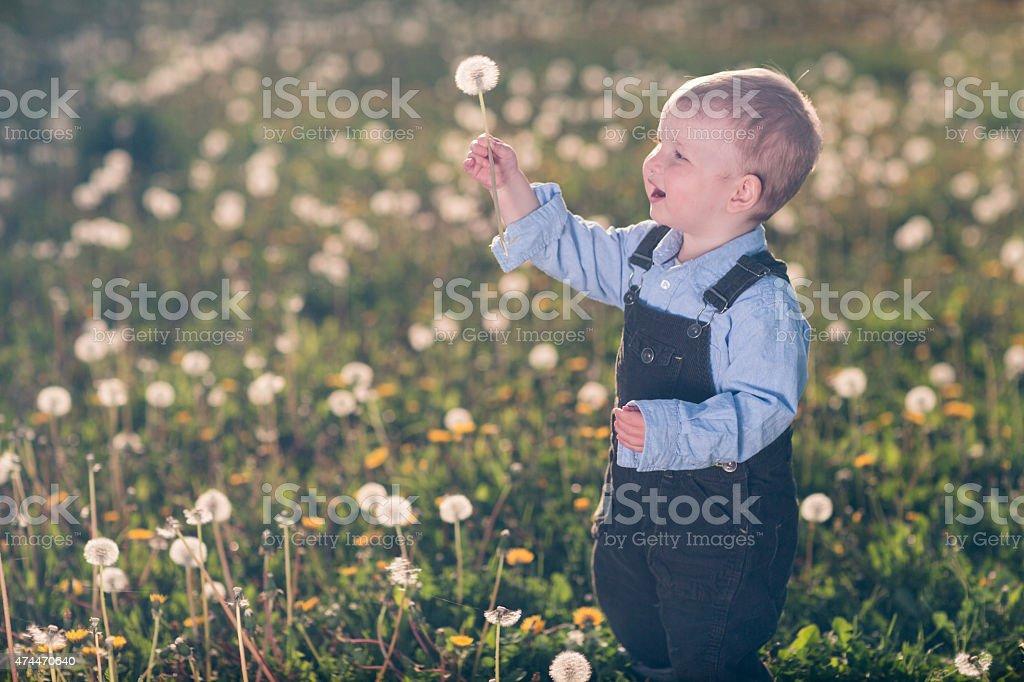 Baby boy & field stock photo