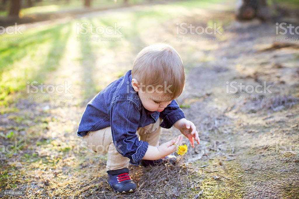 Baby Boy is Picking Wildflowers stock photo