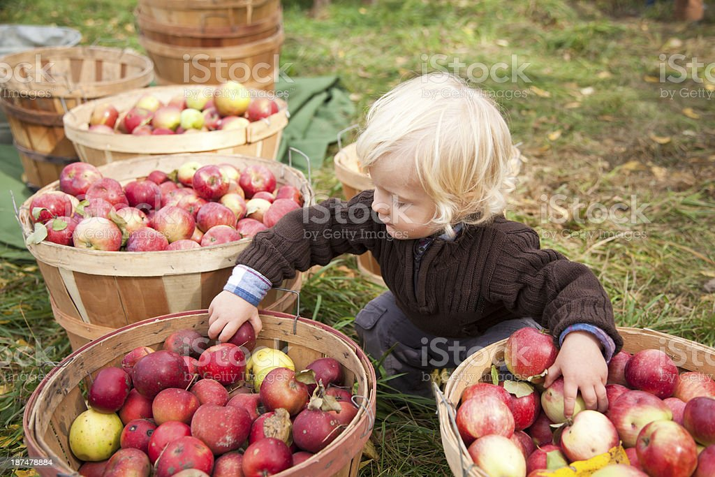 Baby boy picking up apples at the farm stock photo