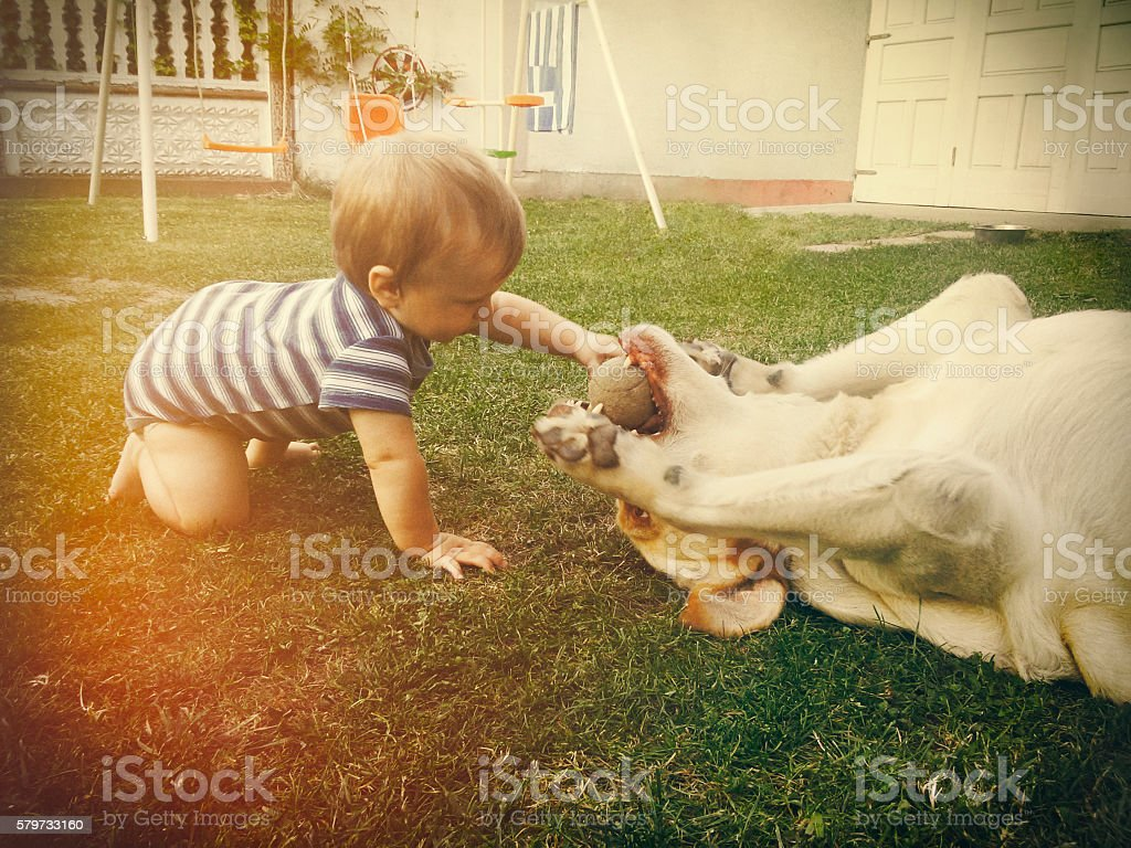 Baby boy playing with his dog in retro tones stock photo