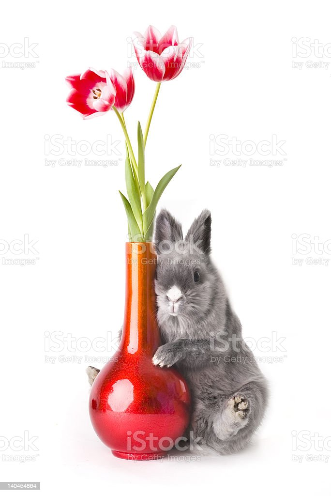 Baby bunny with tulips royalty-free stock photo