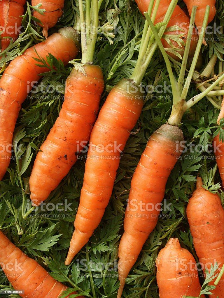 Baby carrots royalty-free stock photo