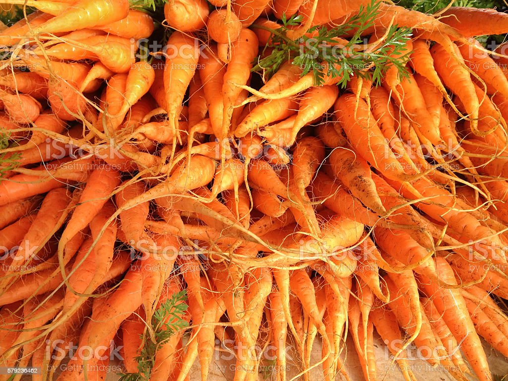 Baby carrots with roots at a farmers market stock photo