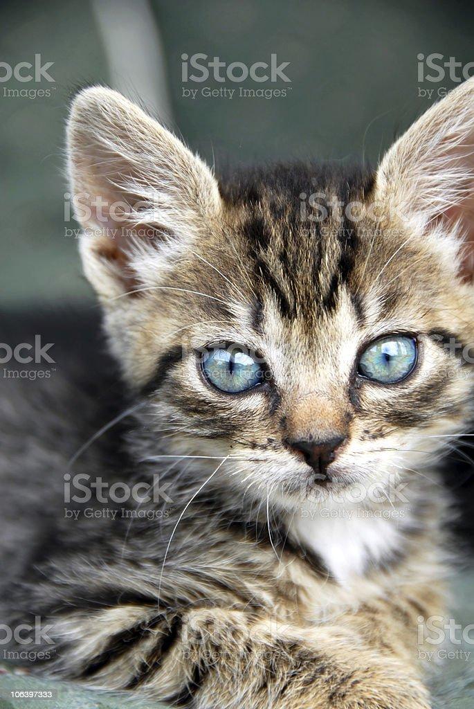 Baby cat portrait royalty-free stock photo