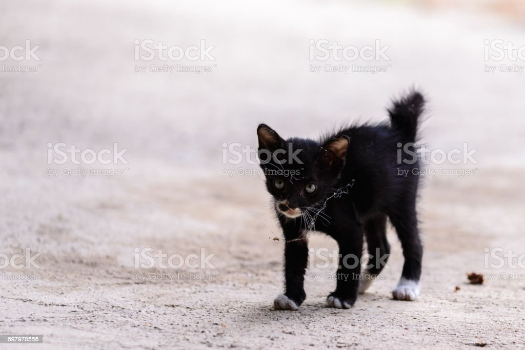Baby cat with spiderweb on face. stock photo