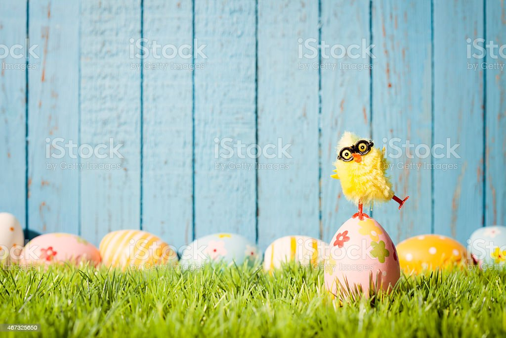 Baby chicken balancing on easter Egg - Grass Blue Wood stock photo