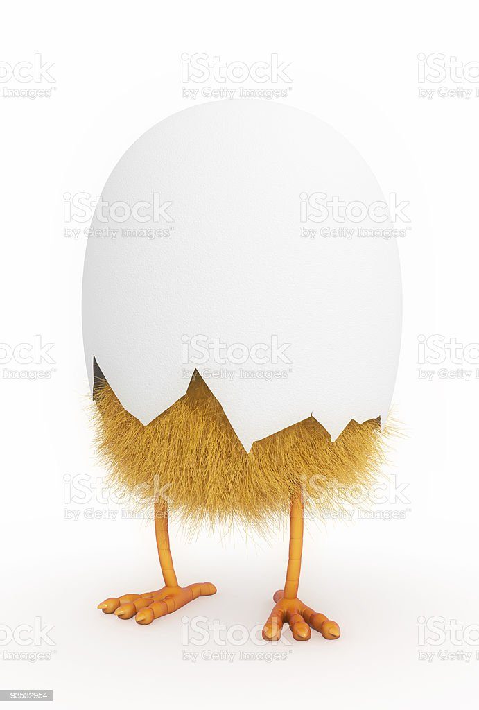 A baby chicken still in half of its shell stock photo