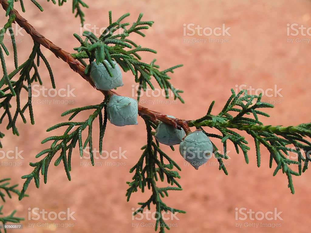 Baby cones stock photo