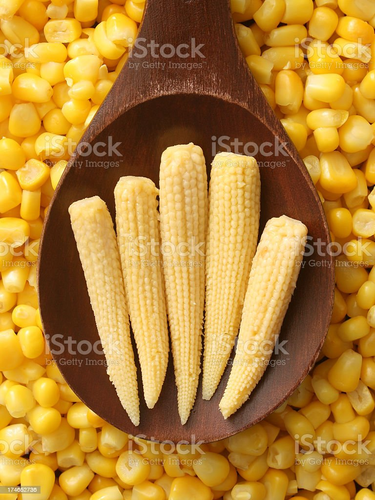 Baby corn stock photo