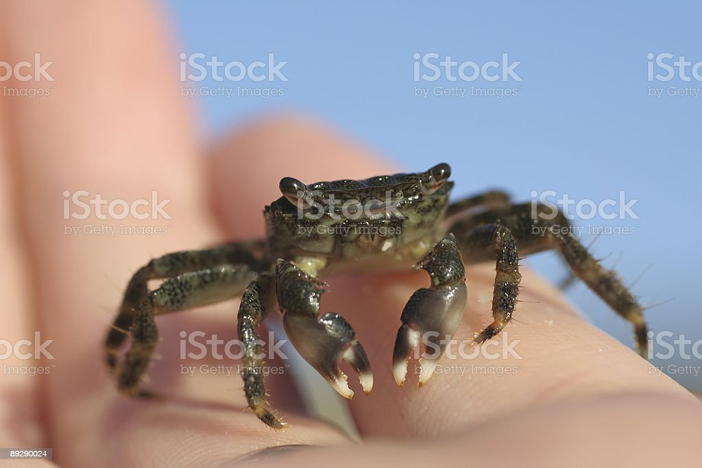 Baby Crab in hand stock photo