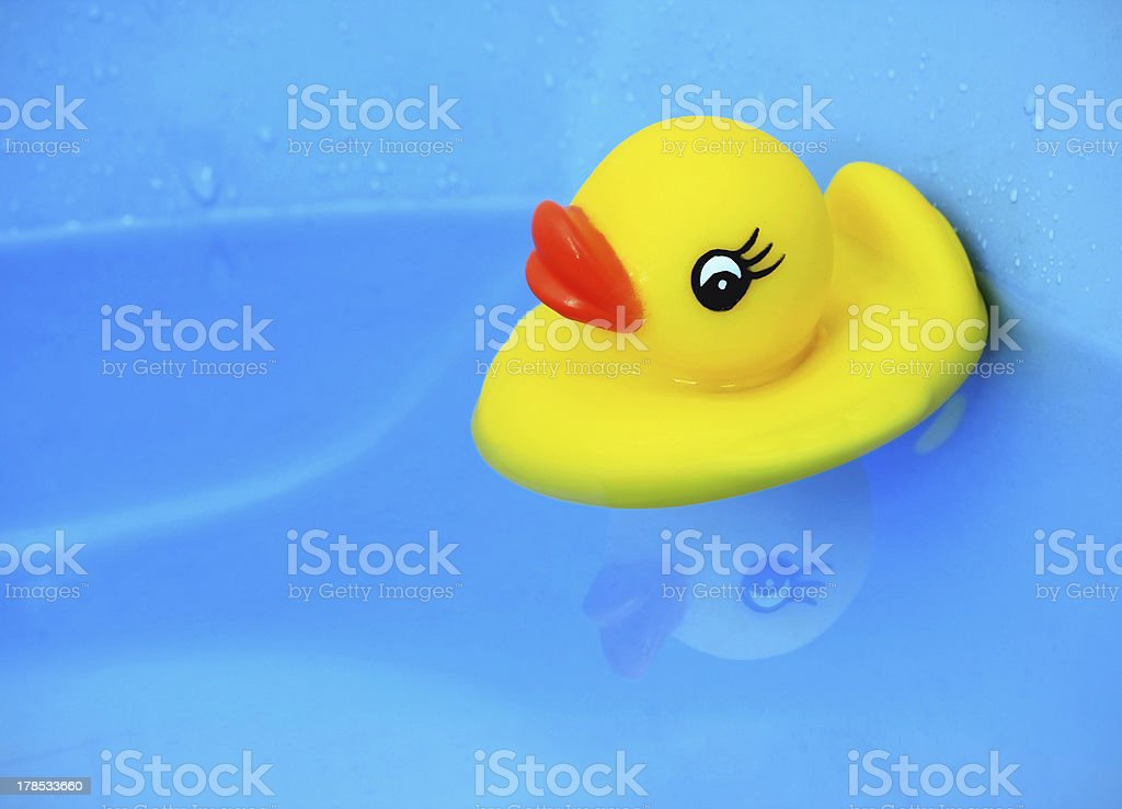 baby duck royalty-free stock photo