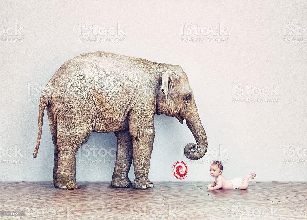 baby elephant and human baby stock photo