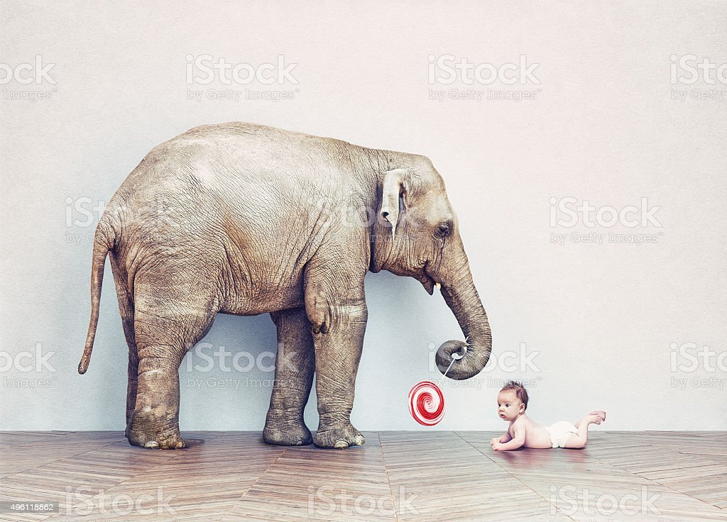 baby elephant and human baby stock photo
