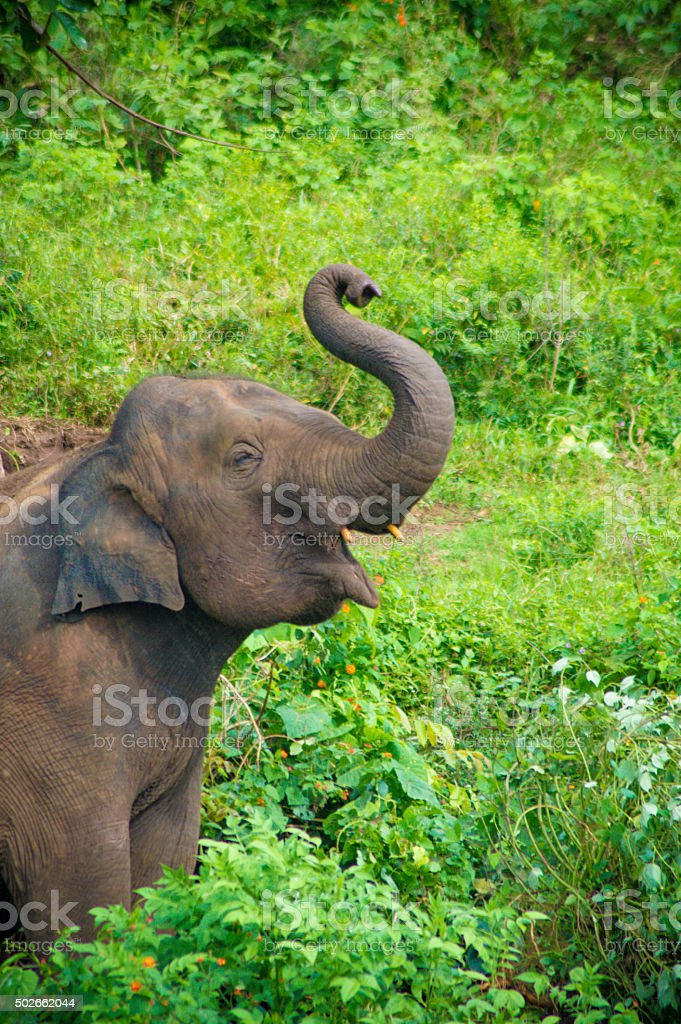 Baby Elephant enjoying the day stock photo