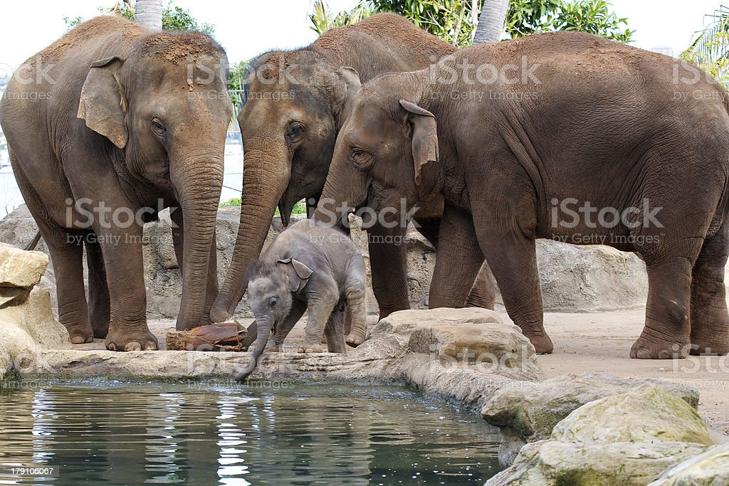Baby elephant with mother royalty-free stock photo