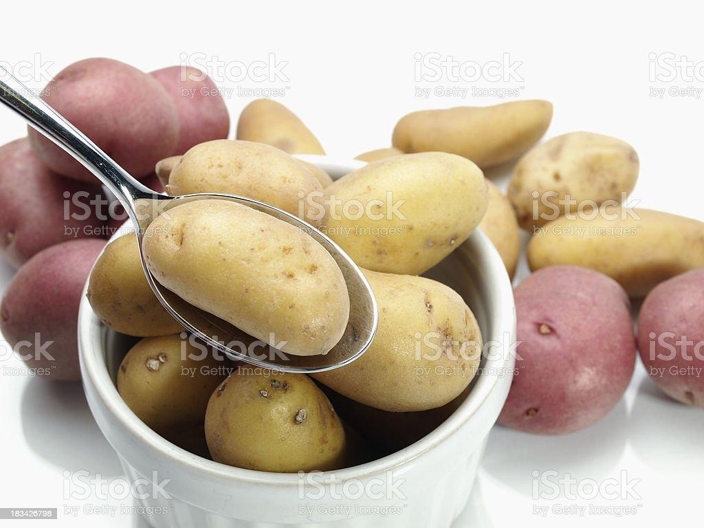 Baby Fingerling Potato on Spoon royalty-free stock photo