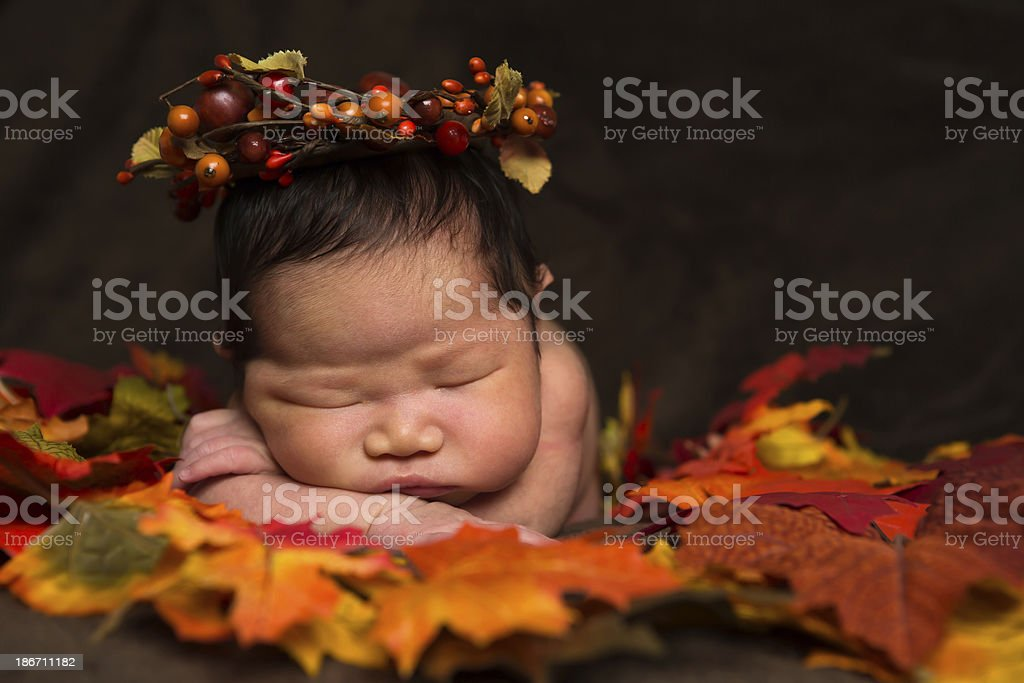 Baby girl newborn laying on autumn leaves royalty-free stock photo