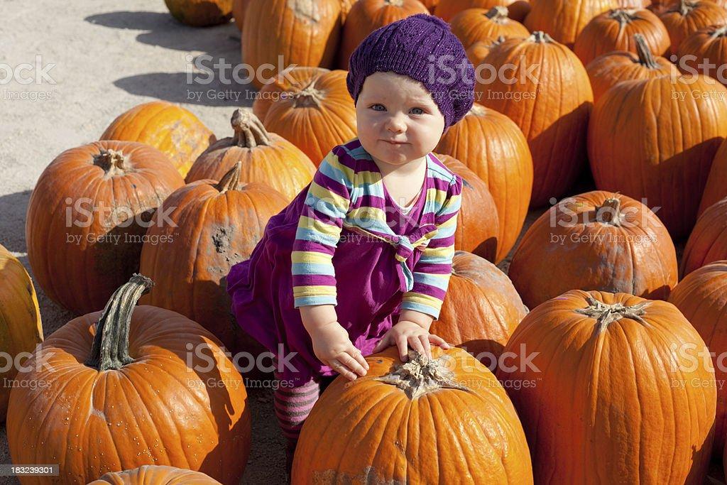 Baby girl picking up pumpkins royalty-free stock photo