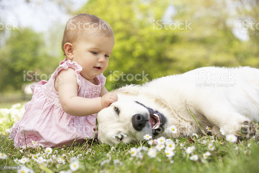 Baby Girl Sitting In Field Petting Family Dog stock photo
