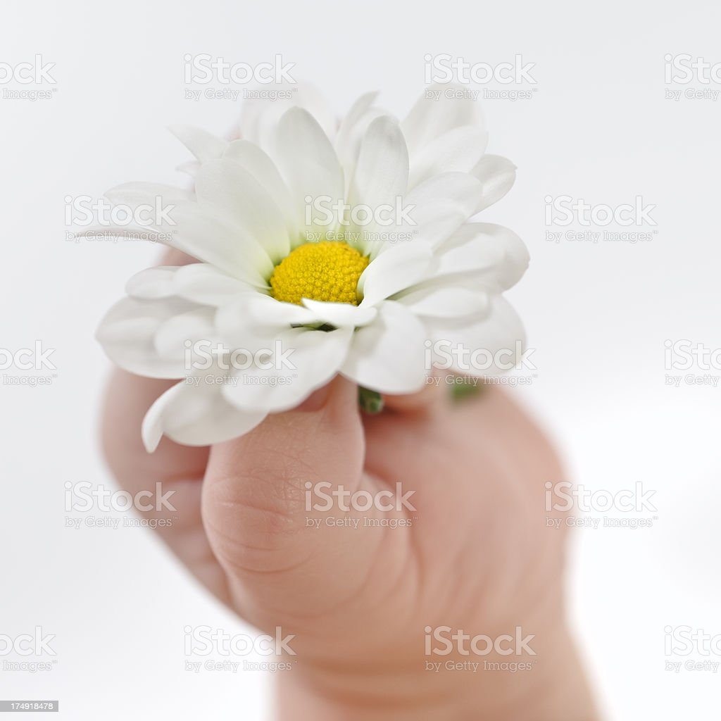 Baby hand with flower royalty-free stock photo