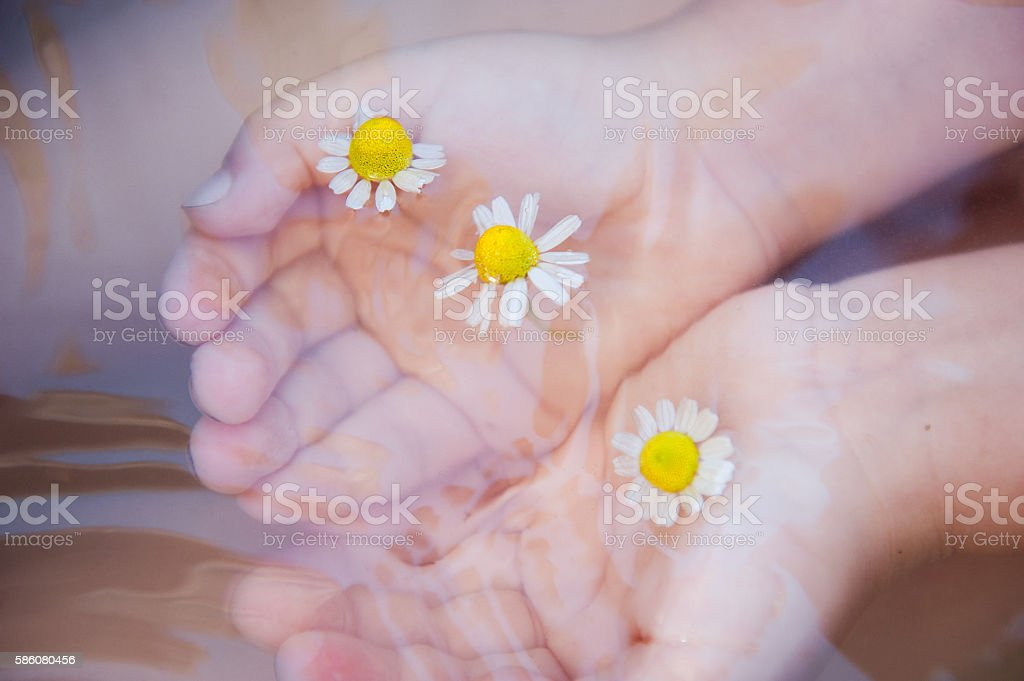 Baby hands with Chamomile flower on the water surface stock photo