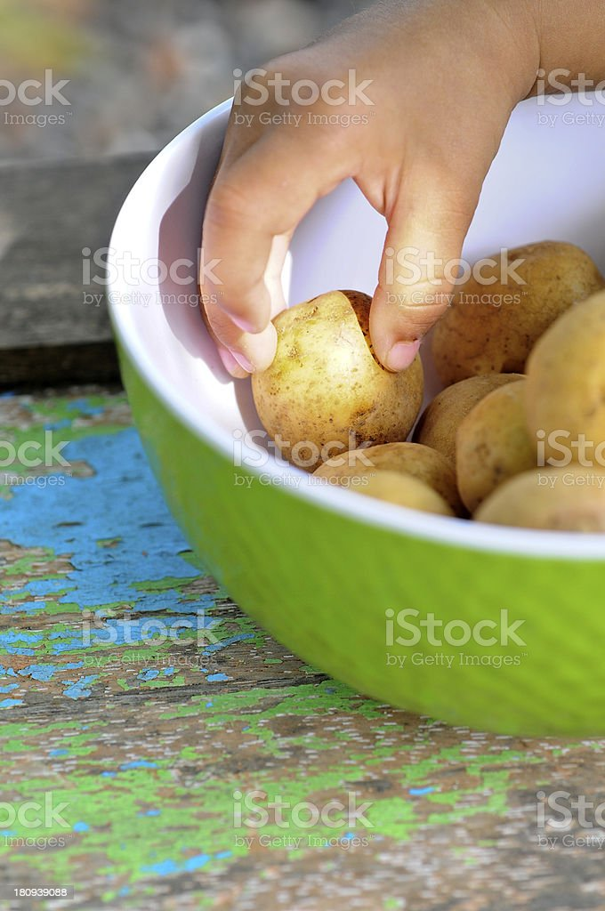 Baby hands with the Fresh Potato royalty-free stock photo