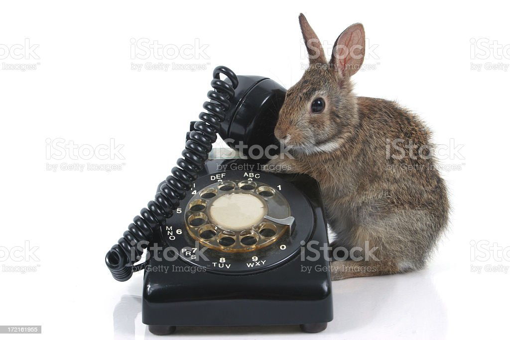 Baby hare and old telephone stock photo