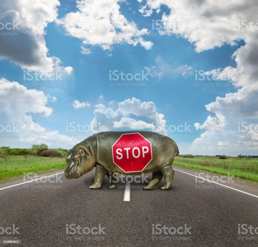 Baby Hippo , passage is closed stock photo