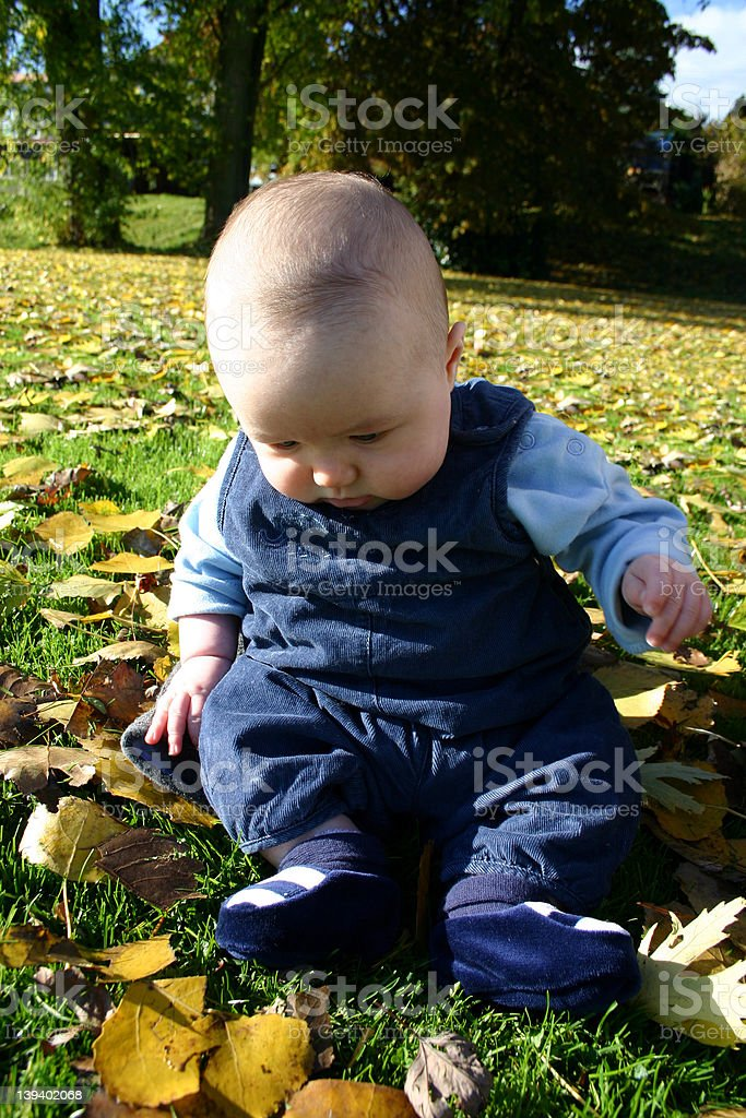 Baby in Autumn Leaves royalty-free stock photo