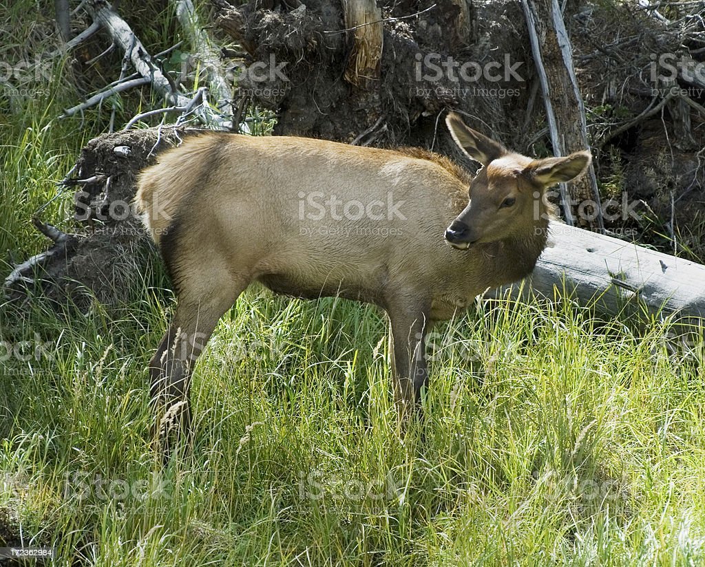 Baby in forest stock photo