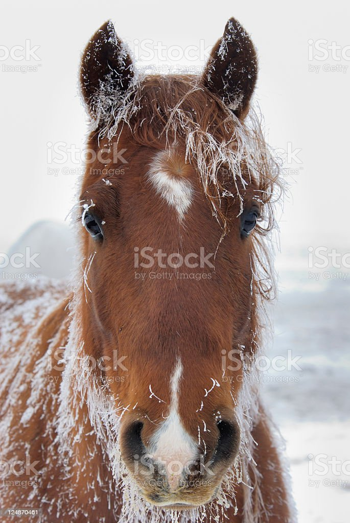 Baby It's Cold Outside! royalty-free stock photo