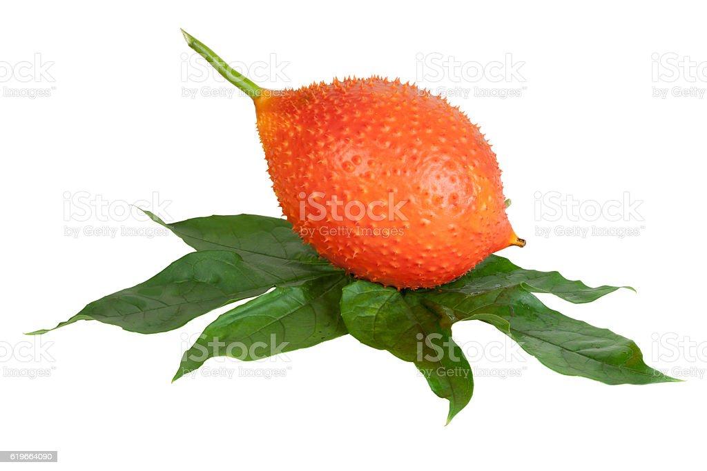 Baby Jackfruit isolated stock photo