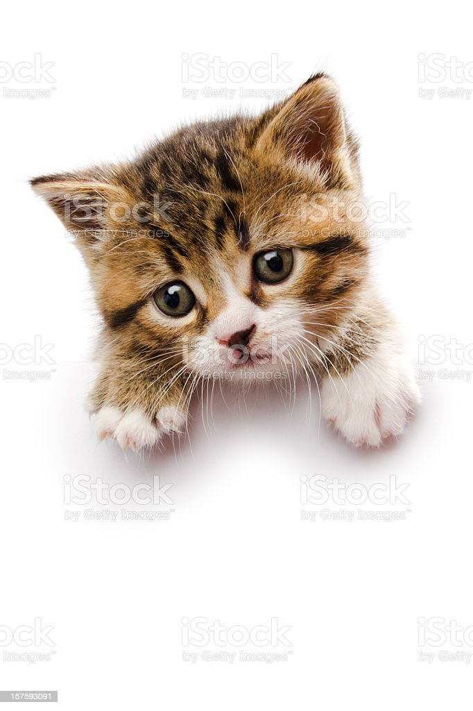 Baby kitten laying on top of a white sign stock photo