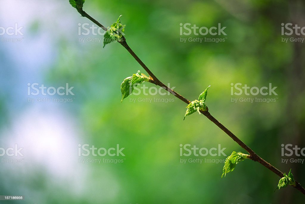 Baby leaves royalty-free stock photo