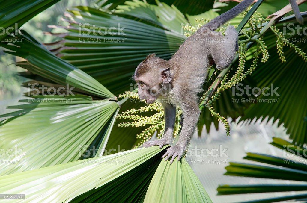 Baby monkey on a palm tree. stock photo